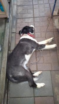 【犬】夏だからね - 人生を楽しくイきましょう!