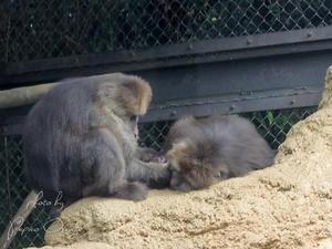 よこはま動物園ズーラシア 8月13日 - お散歩ふぉと