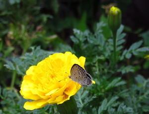 小さなお客さま・・・蝶々 -
