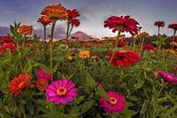 人文字が美しい 夏の富士山 - 山麓風景と編み物