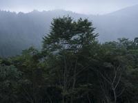 雨の御岳山 - 庭日和