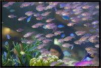 熱帯魚 - TI Photograph & Jazz