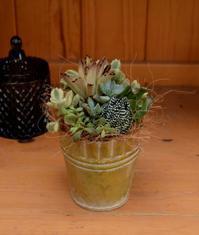 多肉植物の寄せ植えを可愛く - ヒバリのつぶやき