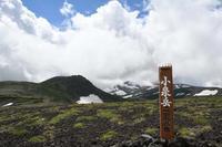 17年北のMemory Album自然編(3)…大雪山系砂礫地帯で出逢った花(2) - ふぉっしるもしてみむとてするなり