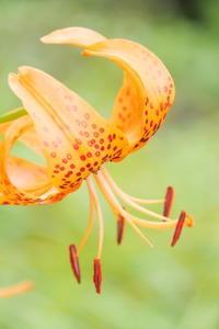 六甲高山植物園 - シャドーボックス作品集