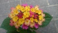 夏に元気な花 - 自分流 Happy Life
