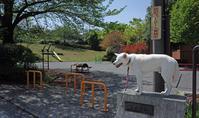 Vol.1221 山王森公園 - 小太郎の白っぽい世界