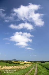 夏らしいな~♪♪ - ekkoの --- four seasons --- 北海道