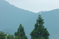 白鷺のいる光景 - 但馬・写真日和