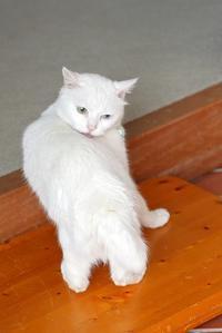 猫 背 - 「美は観る者の眼の中にある」