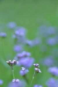 名前の知らない花 - 「美は観る者の眼の中にある」