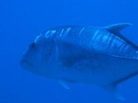 ウチザン礁 2017.7.22 - Travel&Diving