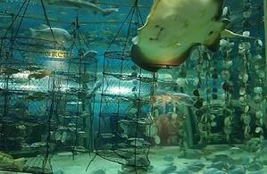 浅虫水族館 - 鍵と芍薬香の猫