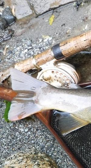 夏の終わりと岩魚とヤマメ -