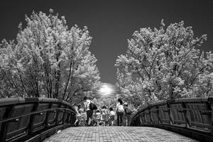 2017年8月18日 白く輝く球体と樹木に引き寄せられる家族 - Silver Oblivion