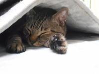 ぴーちゃんの寝顔 - しましまとジュニ