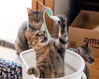 ねこフェス御礼 - 猫と夕焼け