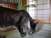 寄るな、危険! - ご機嫌元氣 猫の森公式ブログ