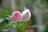 雨つづきの日々♪ - azumiの夢まど