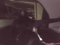 チョコ坊、広島へのロングドライブ - 晴れのちチョコ坊、にゃんぽ日和!