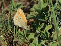 草原の風に翔ぶ蝶を追って(その17) - 不思議の森の迷い人