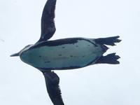 空飛ぶペンギン - 岩月澄子-時の欠片を拾い集めて・・・