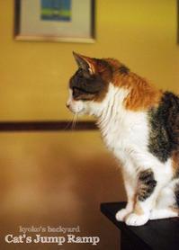 猫たちのジャンプ台 - Kyoko's Backyard ~アメリカで田舎暮らし~