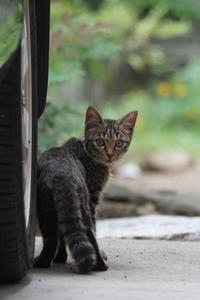 夏休み特別企画第7弾!・小梅 - Black Cat Moan