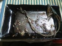 魚に対する思い…明石の釣り@ブログ - 明石の釣り@ブログ