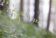 御岳山の花々 - 光の贈りもの