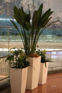 3基の寄せ鉢 - CHIROのお庭しごと