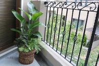 薄曇りのベランダで - CHIROのお庭しごと