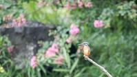 花と小鳥 - 趣味の野鳥撮影