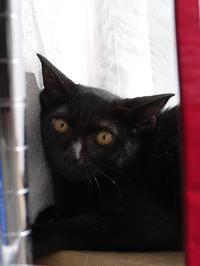 猫のお留守番 やまとくん編。 - ゆきねこ猫家族
