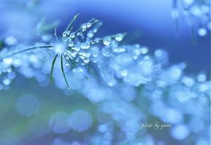 adrop of rain -