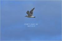 晴れ間をさがして♪ - FUNKY'S BLUE SKY