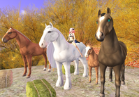 ABC Horse  Happy Birthday Cintie - The Prancing Pony Cafe Diary