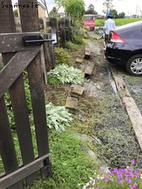 ホヤの花が咲きました - さにべるスタッフblog     -Sunny Day's Garden-