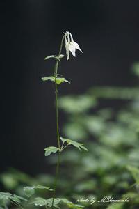 暗い森の中で - 雅郎の花鳥風月