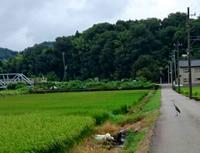 農道と田園と鷺さん - 金沢犀川温泉 川端の湯宿「滝亭」BLOG