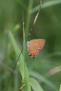涼しい高原で五目撮り - 蝶超天国