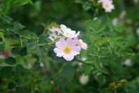 お散歩で撮ったお花たち - やさしい時間
