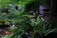 京都 三千院 - favorite pursuit