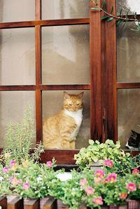 看板猫 - 散策日記