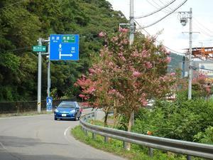 『長良川百日紅街道と三輪神社』 -