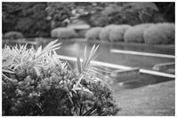夏の霧雨 - BobのCamera