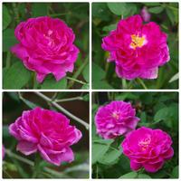 夏の終わりに咲いた花 - 季節の風を追いかけて