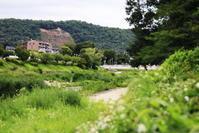 高野川 - 写楽彩