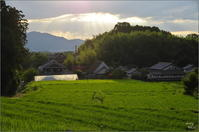 お盆撮り物帳⑯ 八釣 - ぶらり記録(写真) 奈良・大阪・・・