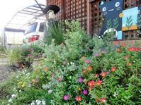 夏の庭 - ろりぽりの花